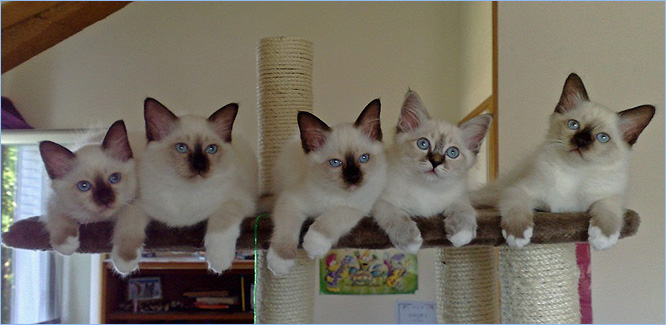 5 petits